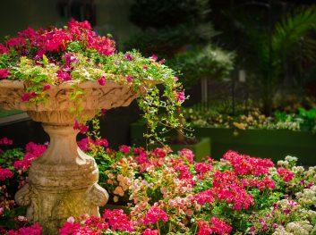 garden-670516_1920